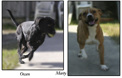 Marty and Owen, S.A.F.E. dogs