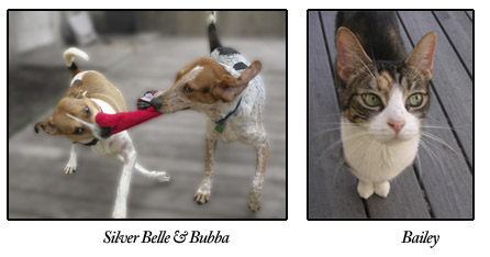 Silver Belle, Bubba, and Bailey, adoptable dogs and cats at S.A.F.E.