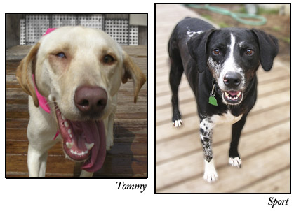 Tommy and Sport, S.A.F.E. dogs