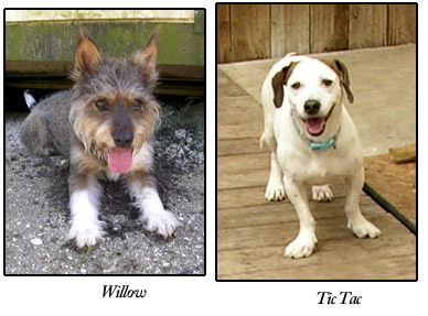 Willow and Tic Tac, S.A.F.E. dogs